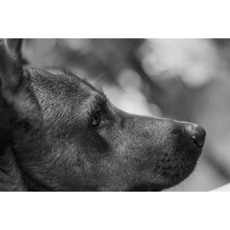 LAMINATED POSTER Dog Puppy Paw Animal Canine Dog Paw Pet Cute Poster Print 24 x 36 - Puppy Paw Print