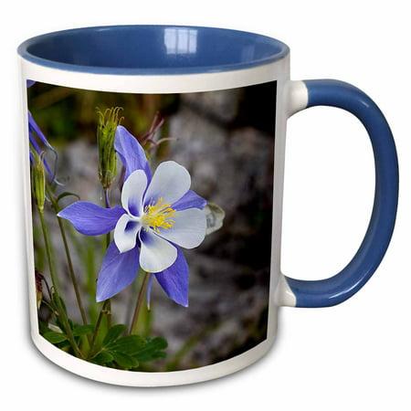 3dRose Colorado Columbine - Two Tone Blue Mug, (Colorado Rockies Mug)
