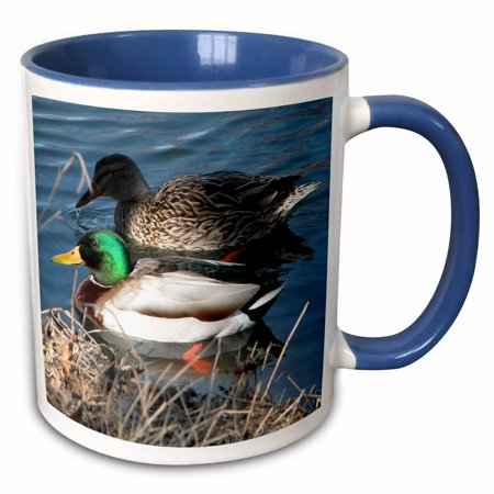 3dRose Mallard Duck Couple - Two Tone Blue Mug, 11-ounce