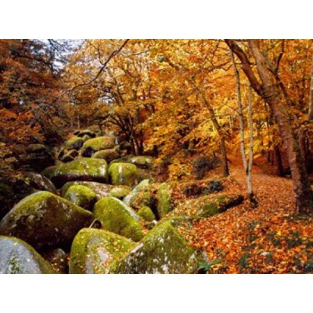 Trees with granite rocks at Huelgoat forest in autumn Finistere Brittany France Stretched Canvas - Panoramic Images (36 x 28) 28 Inch Square Granite Top