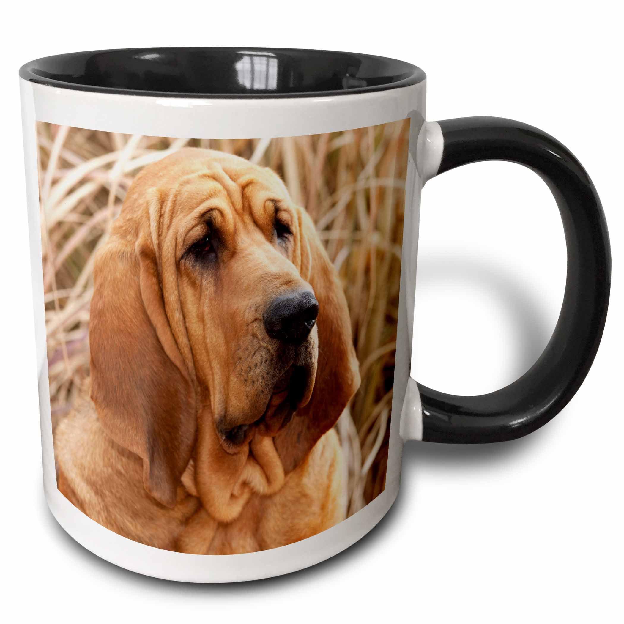 3dRose Purebred Bloodhound dog in dried grass - NA02 PWO0075 - PiperAnne Worcester, Two Tone Black Mug, 11oz
