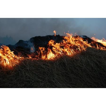 Canvas Print Fire Grass Leaves Hot Blaze Flames Burn Light Stretched Canvas 10 x 14 - Orange Flame Grass