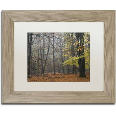 Trademark Fine Art 'Hazy Wood' Canvas Art by Cora Niele, White Matte, Birch Frame