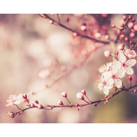 Awesome Cherry Blossom Home Wall Decor Art Decorations Prints
