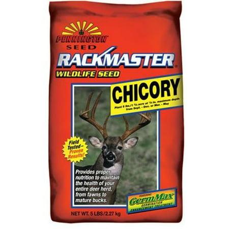 Image of Rackmaster Chicory Food Plot Seed - 5 Lbs