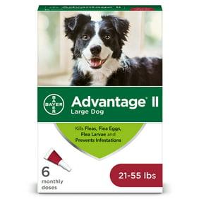 XXX Triple X-Rated Fun Animal Pet Dog Cat Leash