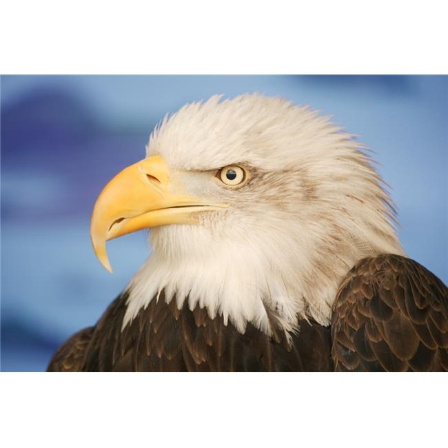 Posterazzi DPI1767620 Profile of A Bald Eagle Poster Print by Don Hammond, 17 x 11 - image 1 de 1