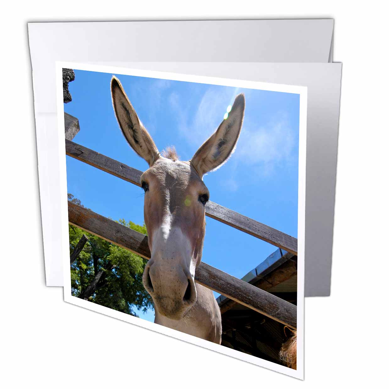 3dRose Donkey in a farm 2, Greeting Cards, 6 x 6 inches, set of 6