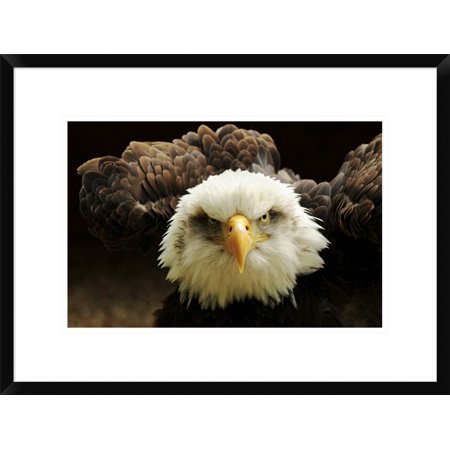 Global Gallery Tim Kirwan 'The Judge' Framed Wall - Gallery Trim