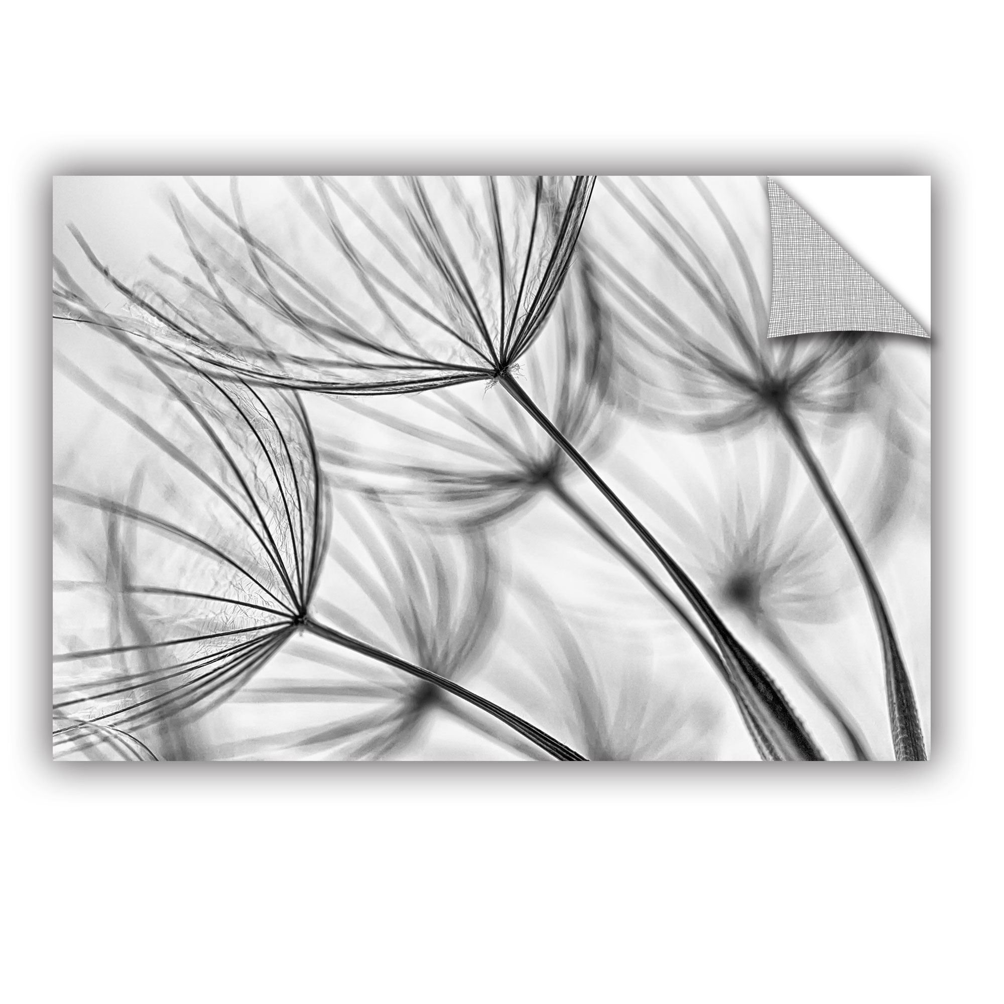 'Parachute Seed I' Removable Wall Art Mural