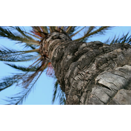 LAMINATED POSTER Trunk Background Palm Tree Texture Tree Poster Print 24 x 36 ()