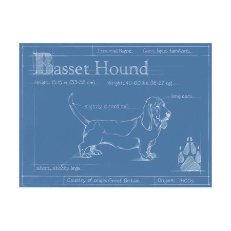 Blueprint Basset Hound Print Wall Art By Ethan Harper