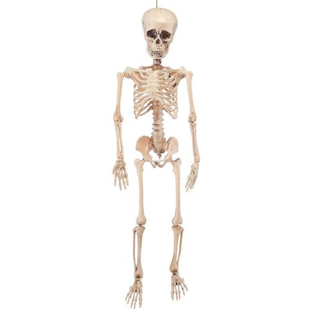 Halloween Posable Skeleton (The Holiday Aisle Posable Halloween)