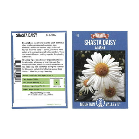 Shasta Daisy Flower Seeds - Alaska Variety - 1 Gram Seed Packet - White Blooms, Yellow Centers - Perennial Daisies - Flower - Center Daisy