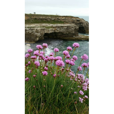 Framed art for your wall seaside sea pinks clifftop sea rocks flower framed art for your wall seaside sea pinks clifftop sea rocks flower 10x13 frame mightylinksfo