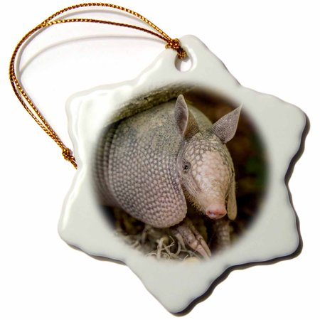 3dRose USA, Louisiana, Lake Martin. Young nine-banded armadillo. - Snowflake Ornament, 3-inch
