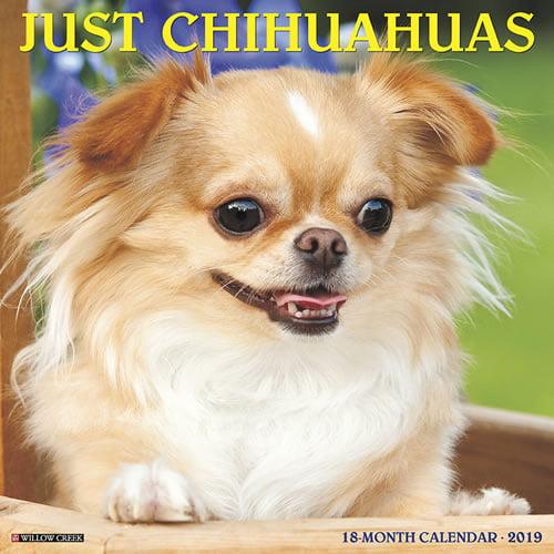 Willow Creek Press 2019 Just Chihuahuas Wall Calendar