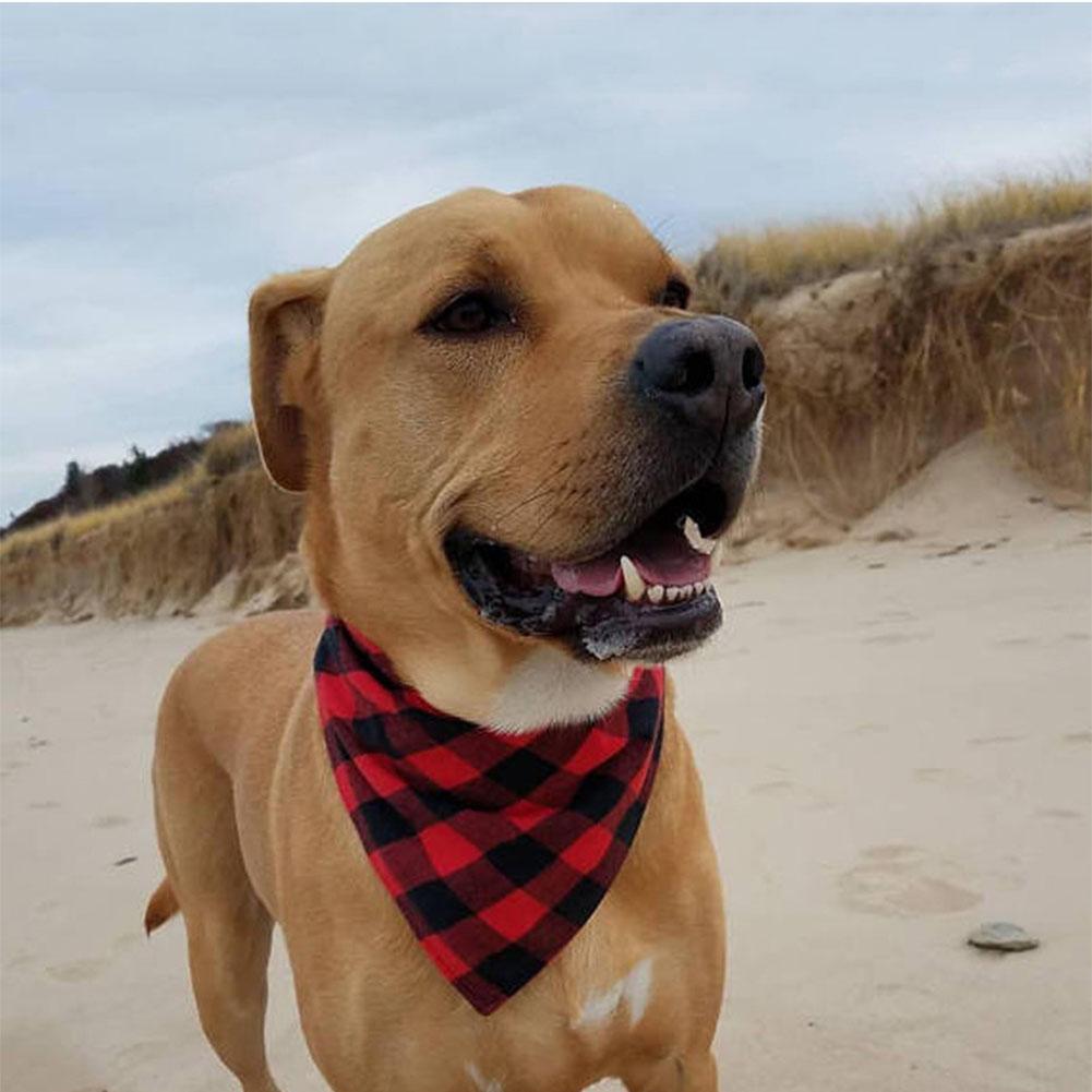 Pet Owner Set Selfie Ready Madras Plaid Dog Bandana and HuMom Infinity or Rectangle Scarf Tie-On monogram pet bandana