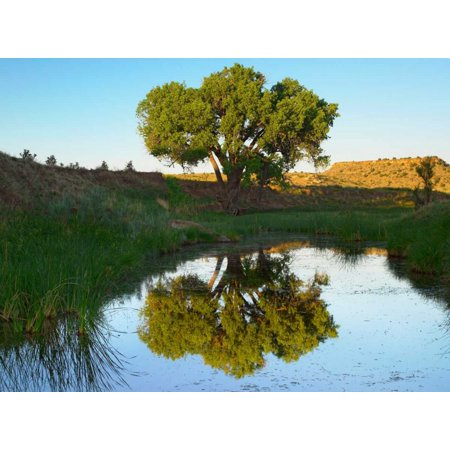 Tree reflecting in creek near Black Mesa State Park Oklahoma Poster Print by Tim Fitzharris - Halloween Stores In Oklahoma