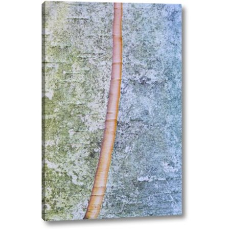 Millwood Pines 'Canada, Quebec, Split paper birch bark detail' by Gilles Delisle Giclee Art Print on Wrapped Canvas - Birch Bark Paper