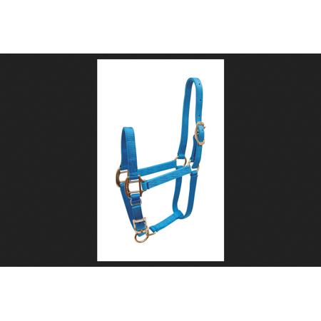 Hamilton Aqua Nylon Halter For Horse Weanling