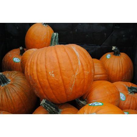 Framed Art For Your Wall Pumpkins Vegetable Squash Halloween Orange Pumpkin 10x13 - Pumpkin Squash For Halloween