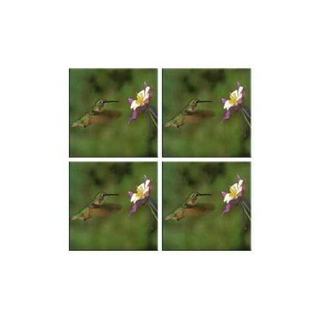 Mcgowan Tuftop Hummingbird And Columbine Coasters  Set Of 4