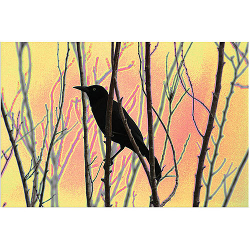 "Trademark Fine Art ""Blackbird Dreams I"" Canvas Art by Patty Tuggle, 16"" x 24"""