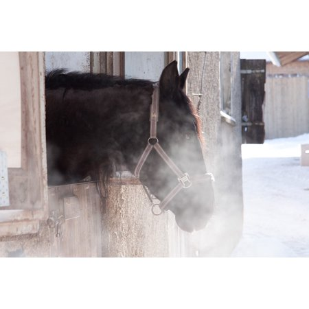Canvas Print Outlook Horse Reiterhof Cold Stall Brown Winter Stretched Canvas 32 x 24 ()