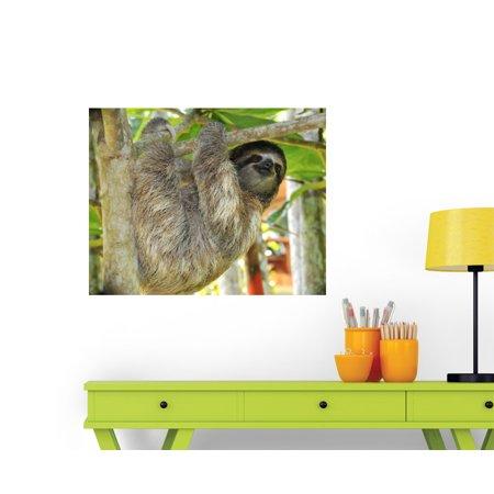 Three Toed Sloth Male Wall Decal Wm9036 By Wallmonkeys  36 In W X 28 In H