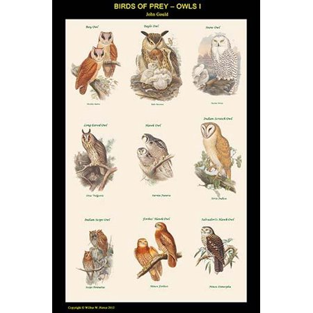 Birds of Prey - Owls - Vertical Classroom Poster  High quality vintage art reproduction by Buyenlarge  One of many rare and wonderful images brought forward in time  I hope they bring you pleasure eac