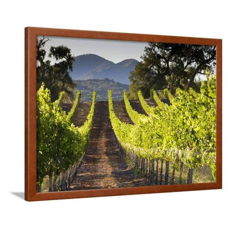 Arroye Grande, California: a Central Coast Winery Framed Print Wall Art By Ian
