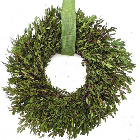 Dried Flowers and Wreaths LLC Fresh Boxwood 22