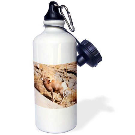 3Drose Rocky Mountain Bighorn Sheep  Ram  Wildlife   Us06 Pwo0019   Piperanne Worcester  Sports Water Bottle  21Oz