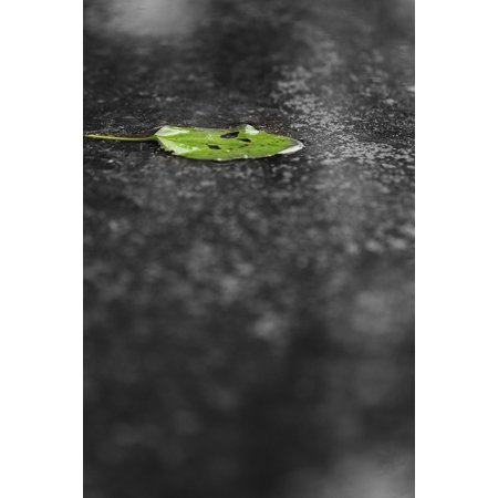 Leaf Spring Traction Bars - Laminated Poster Water Weather Leaf Spring Green Leaves Rain Green Poster Print 24 x 36