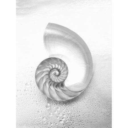 Posterazzi Pearl Nautilus Shell Cut In Half Showing Chambers (Black And White Photograph) Canvas Art - Kate Turning and Tom Gibson  Design Pics (24 x 32)