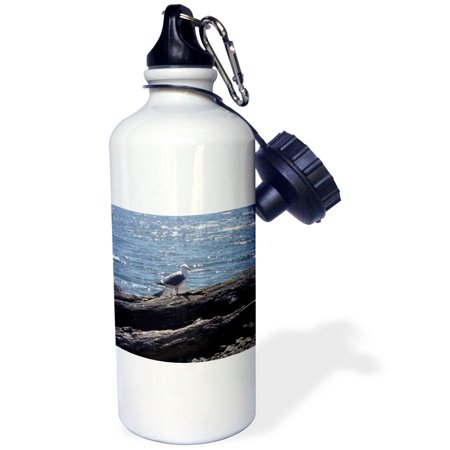 3dRose Northern Oregon Coast Seagull, Sports Water Bottle, (Best Places Camp Oregon Coast)