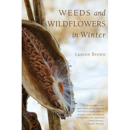 Weeds and Wildflowers in Winter - eBook