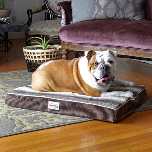 Simmons Beautyrest Beautyrest Memory Snooze Orthopedic Dog Bed