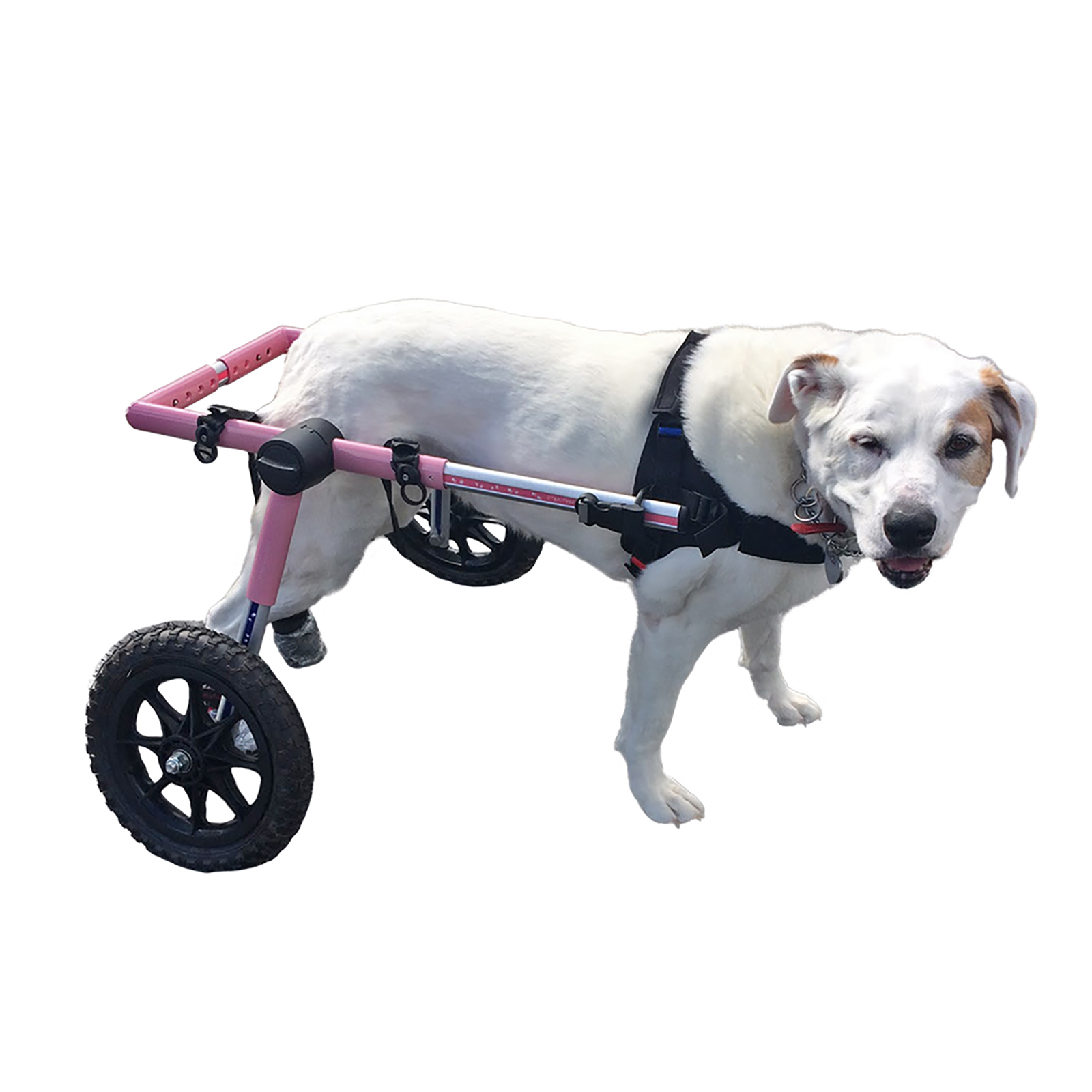 Dog Wheelchair For Large Dogs 70-180 lbs Pink - By Walkin...