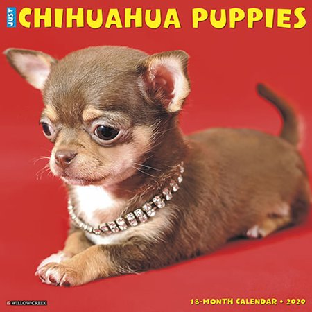Chihuahua 2010 Calendar - Willow Creek Press 2020 Just Chihuahua Puppies Wall Calendar
