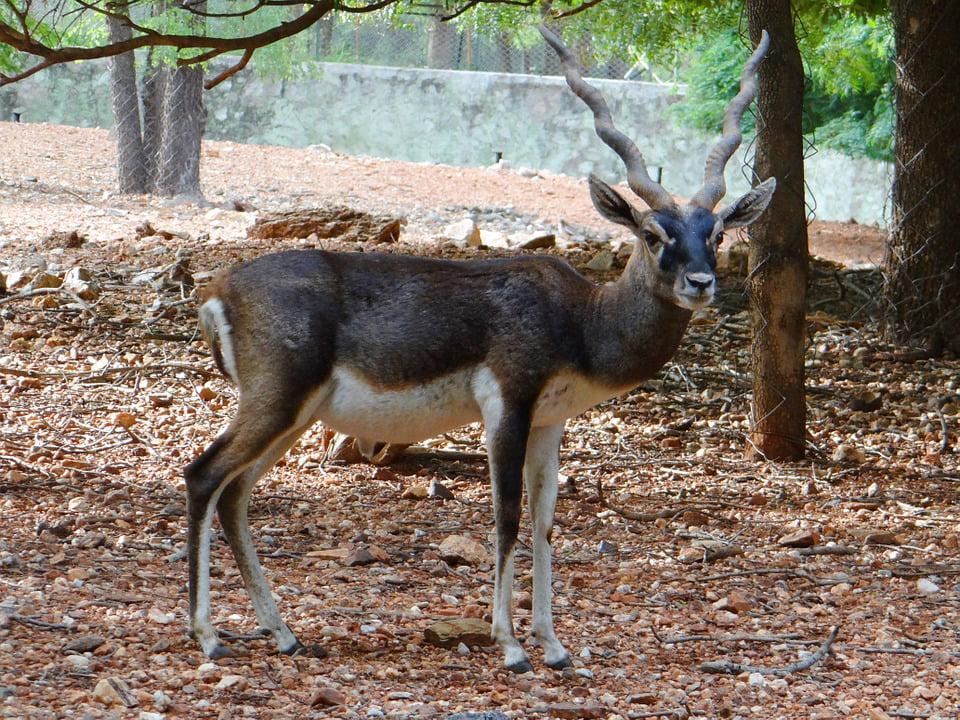 walmart antelope