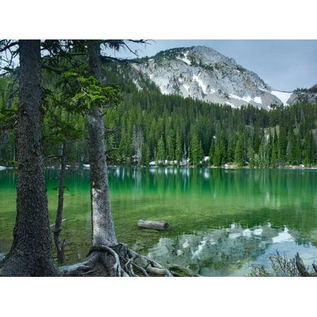 Pine trees on the edge of Fairy Lake Montana Poster Print by Tim Fitzharris
