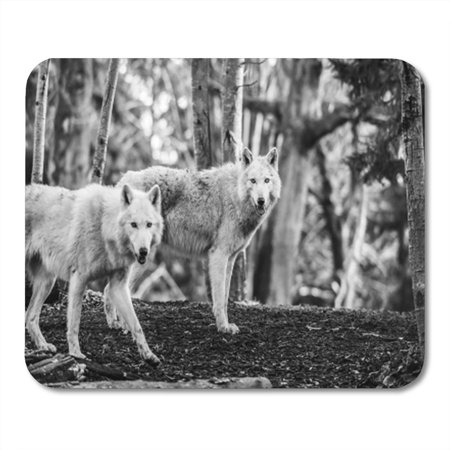 LADDKE Gray Two White Arctic Wolfs in The Woods Mousepad Mouse Pad Mouse Mat 9x10 inch