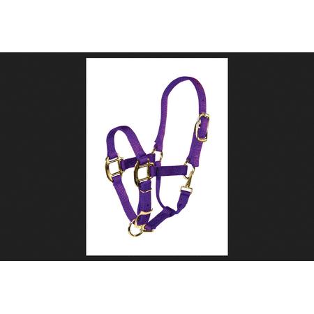 Hamilton Purple Nylon Halter For Horse Weanling