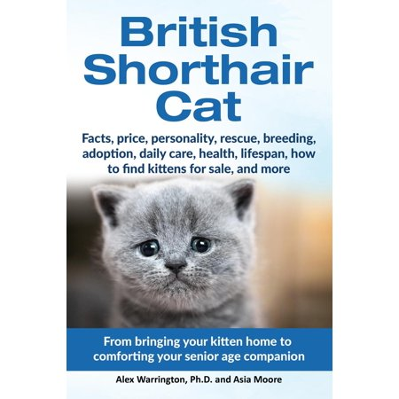 British Shorthair Cat: From Bringing Your Kitten Home to Comforting Your  Senior Age Companion - eBook