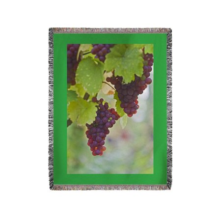 Wine Grapes On Vine  3   Lantern Press Photography  60X80 Woven Chenille Yarn Blanket