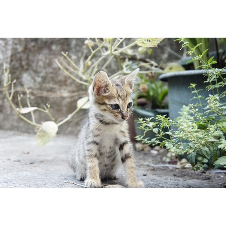 Canvas Print Cat Small Cat Stretched Canvas 32 x 24