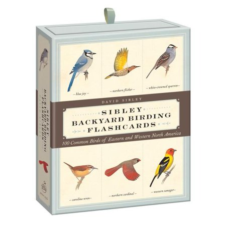 Sibley Backyard Birding Flashcards : 100 Common Birds of Eastern and Western North America Victory Common Card
