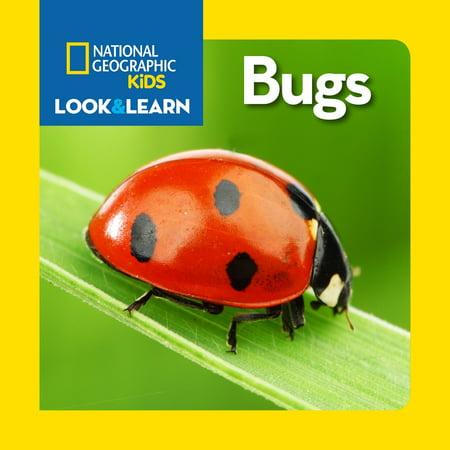 Bugs (Board Book) (Green Bug That Looks Like A Praying Mantis)